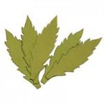 Листья ромашки, 50мм, 5 штук - А2