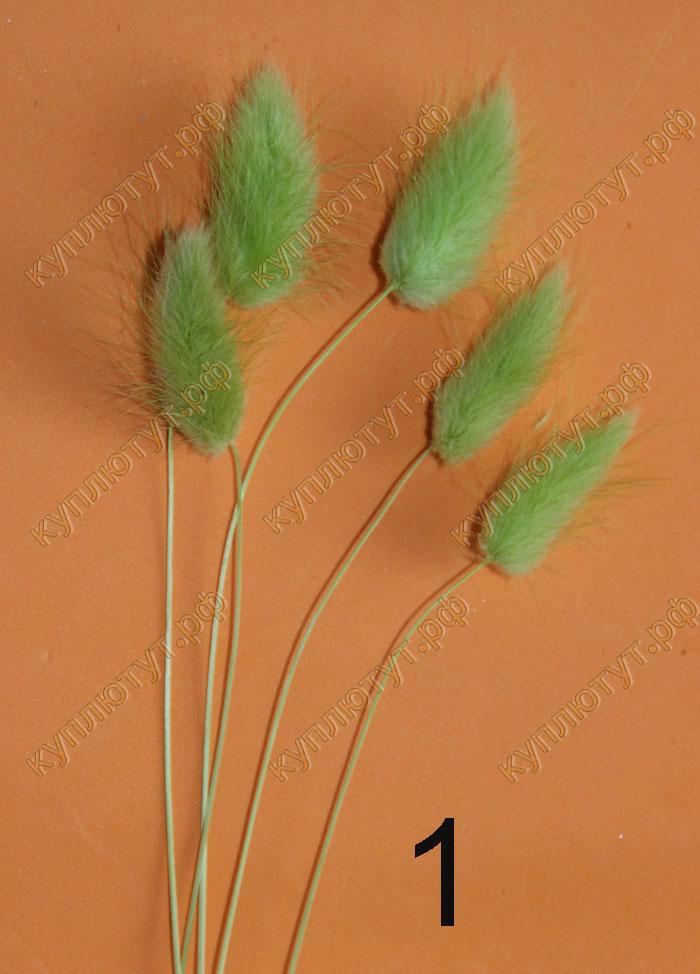 Лагурус 8 цветов, 5шт